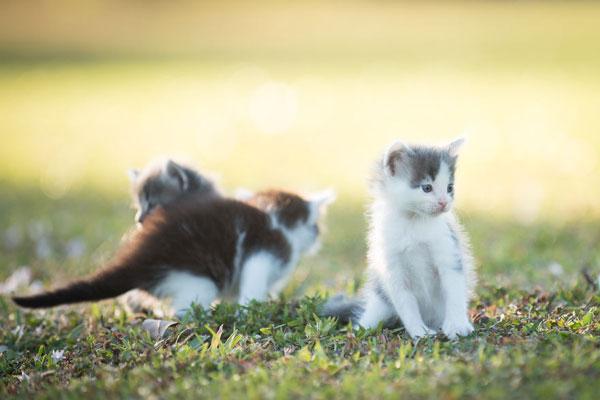 心都萌化了 测试镜头居然拍这么心爱的小猫