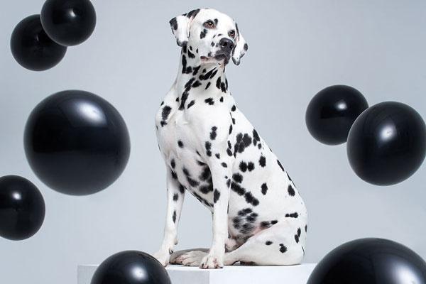 奇思妙想 为每只狗狗打造专属个性写真