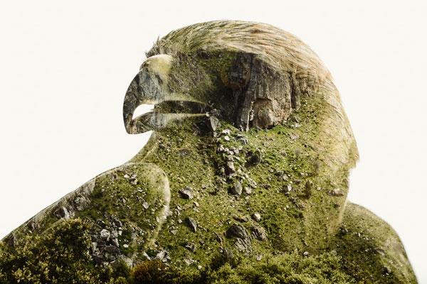 人文与自然的美妙叠画 绿意盎然的创意拼贴