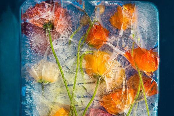 绝妙视觉创意拍摄 冰封花朵诠释永恒之美