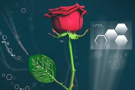 世界第一朵电子玫瑰诞生:像显示器一样变色