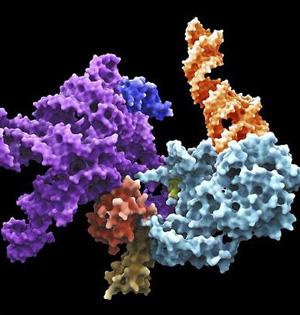 核糖体或揭露38亿年前地球环境