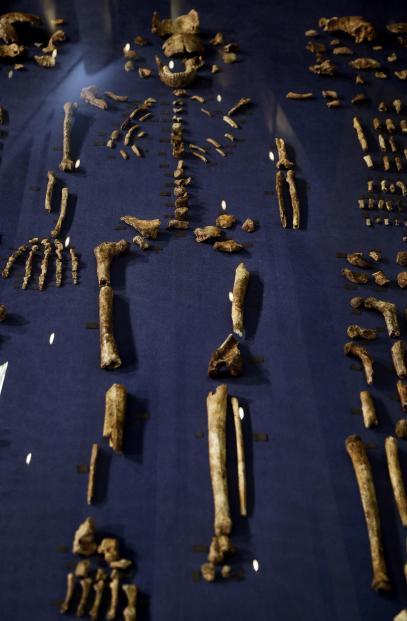 我们的远古祖先:南非境内发现一种新的古人类纳勒迪人