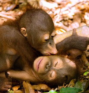 猴年看猴:这厮竟然与人类这么像