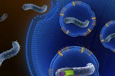 埃博拉研究获重大突破:阐释病毒膜融合激发机制
