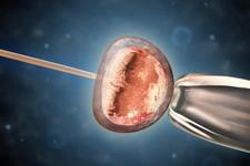 只有异性才相吸?干细胞技术可实现同性生殖