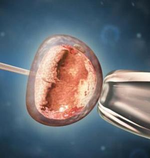 干细胞技术可实现同性生殖