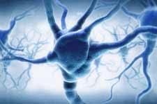 大脑存储容量有多大:相当13.3年高清电视录像