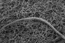 地球深处有动物存在吗?线虫耐高温高压