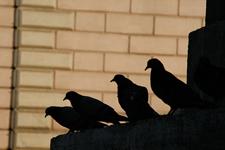 科学家发现量子鸽子洞理论:或改变理解物理方式