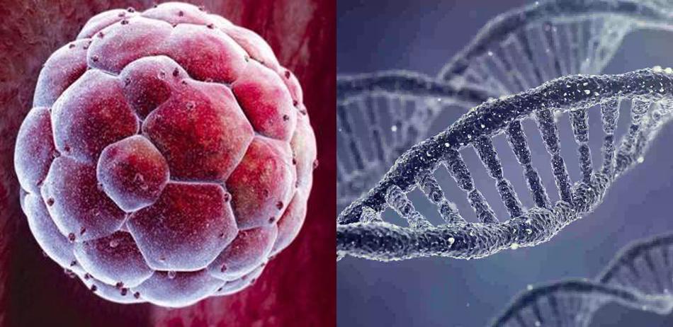 修改DNA?科学家获批研究人类胚胎基因编辑技术