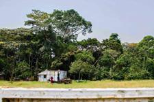 揭秘寨卡发源地乌干达:病毒源头一片平静