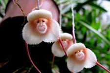 植物们的猴猴情缘:与猴有关的植物原来这么多