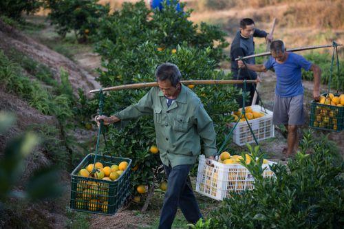赣南农村创业样本:农民做电商的兴奋与窘境