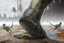 蜥脚类恐龙游泳足迹化石鉴定:沉积不浪漫的结果