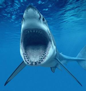 我们能像鲨鱼一样牙齿再生吗?