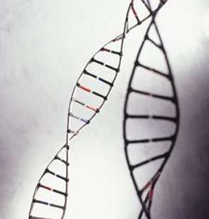 人类DNA包含远古病毒基因:约8%