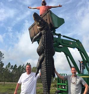 美国猎人捕获4.6米长巨型短吻鳄