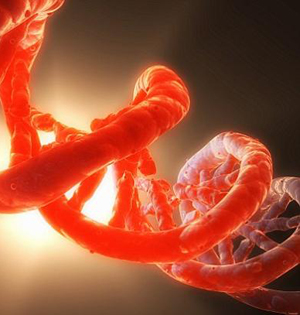 科学家或解遗传机制不变之谜