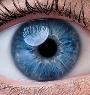 科学家首次用皮肤干细胞恢复视力