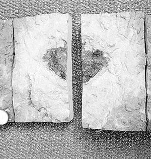 4.7亿年前新陨石或帮助重塑历史