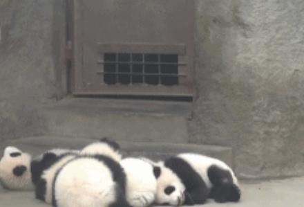 GIF:在哪里倒下,就在哪里...睡