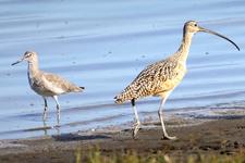 甘肃发现大面积古鸟类足迹新种化石:重构精妙的古世界
