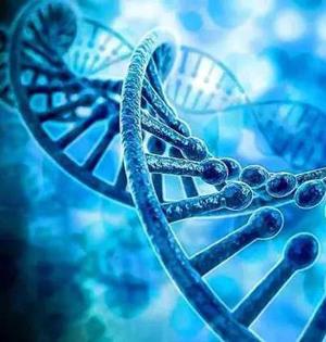中国基因编辑研究,专家怎么说?