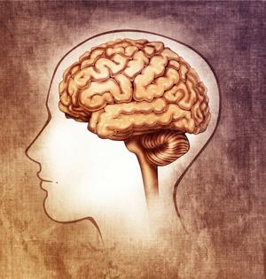迄今最精确人类大脑图谱出炉