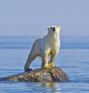 未来全球海平面上升速度将升级