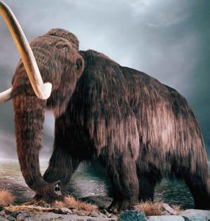 最后一批猛犸象或死于缺少饮用水