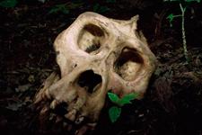拥有大脑袋或导致灭绝风险巨大:海绵曾有大脑弃之不用
