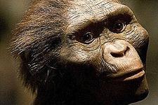 """人类祖先""""露西""""可能是摔死的:从12米高树上垂直摔落"""