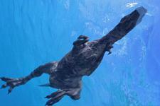 肉食恐龙也会游泳:中国首次发现植食恐龙-肉食恐龙游泳足迹