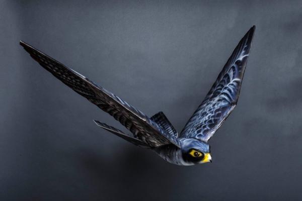 来互相伤害吧:鹰形无人机为保护机场吓跑飞鸟
