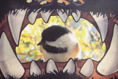"""只为观察小鸟觅食 艺术家在玻璃窗上建""""鸟窝"""""""