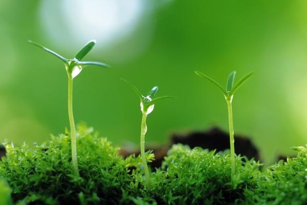 有这个花盆 小户型也能肆意摆弄花花草草了