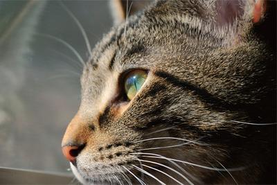 呈现动物之美 如何巧妙的运用室外自然光