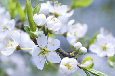 四月樱花季 适合拍摄樱花的单反相机推荐