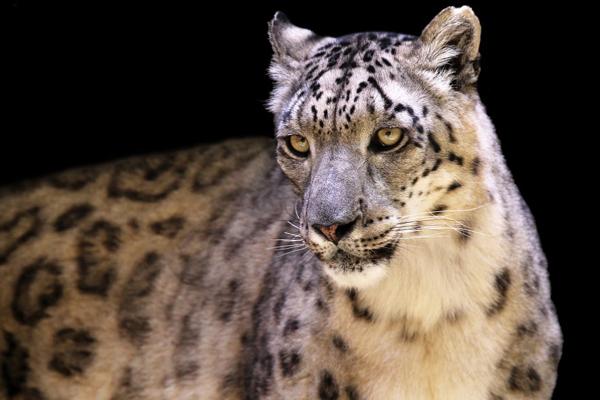 展现野生动物的最美肖像 为野生动物拍张证件照