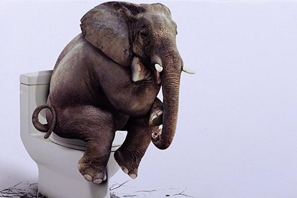 有什么想不开?来杯大象粪做的啤酒压压惊!