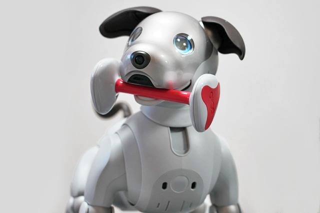 """""""狗机交互""""来了!狗子会听谁的话?"""