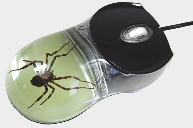 带有蜘蛛标本的透明鼠标