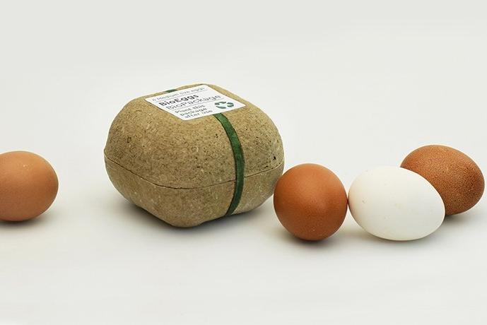 鸡蛋吃完盒子不要扔 盒子还能再长出豆苗蔬菜