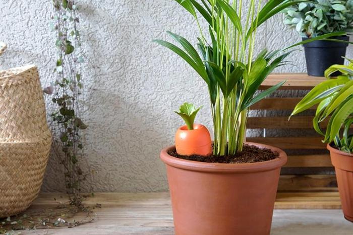 外观酷似胡萝卜其实它有大用 能自动为花草浇水