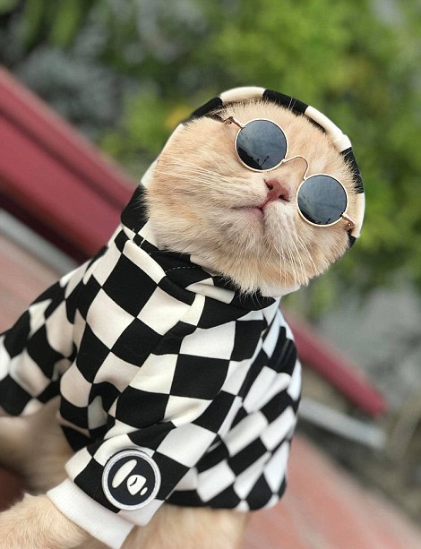 6 / 13 近日,越南一只可爱的宠物猫因身穿黄色帝王风格小袍子在鱼摊卖