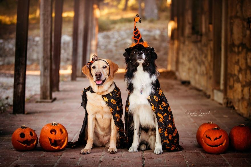 在每年的11月1日,是西方的传统节日;而万圣节前夜的10月31日是