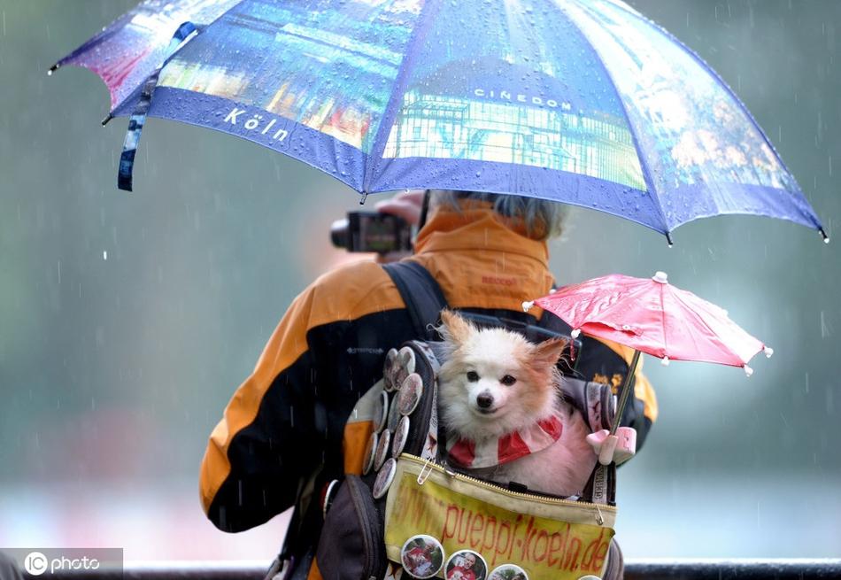 春雨纷纷 盘点小动物避雨妙招