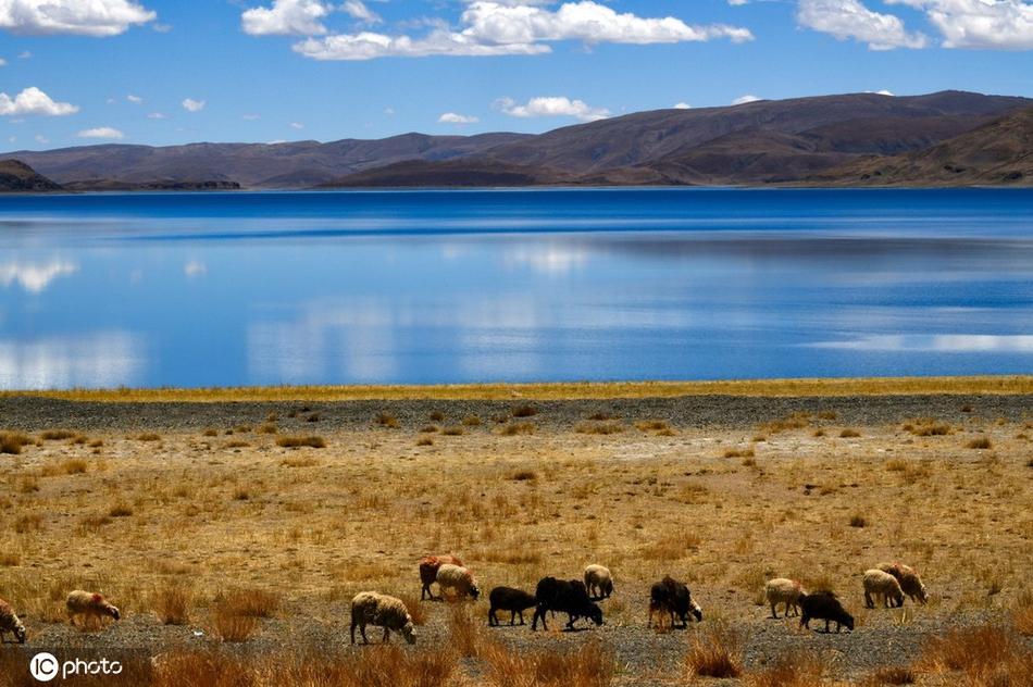 西藏三大圣湖之一羊卓雍措初夏景致美如画