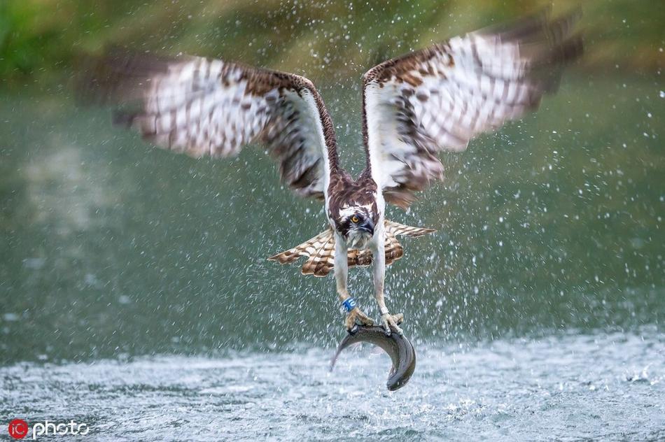 到嘴的肥肉就这么飞了!自然界最佳猎